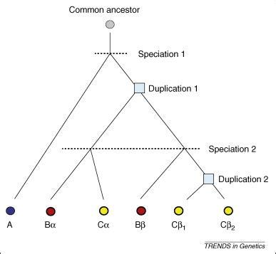 Evolution vs Intelligent Design Essay Example Topics